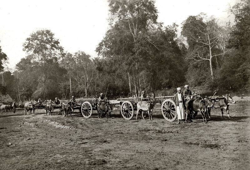 """Our present dry weather transport for travelling. The district has been opened up by a system of cart roads for the extraction of timber by buffalo carting with the result that few parts of the forest remain inaccessible to this means of travelling. Bicycles can likewise be used."""