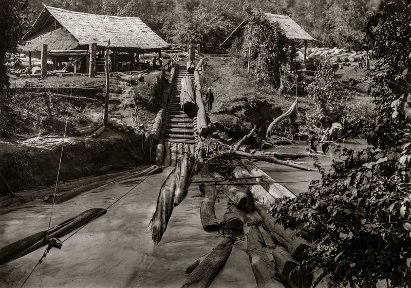 """ This is where the logs are taken out of the river above the fall (already mentioned) A capstan is worked by buffaloes dragging the logs up the slipway and loading them onto gindakes (carts.) on which they are taken up and along the hill to the top of the chute, and then sent down the river again, just below the exit from the hill."""