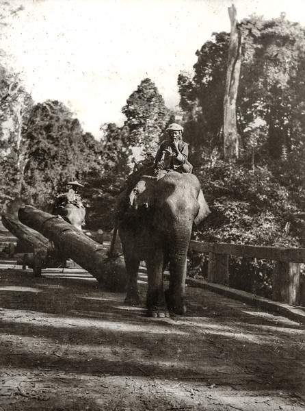 """Elephants carting over the bridge."""