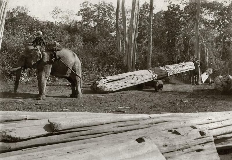 """Elephant (Htoo Mai, Mg Hmay riding) carting log."""