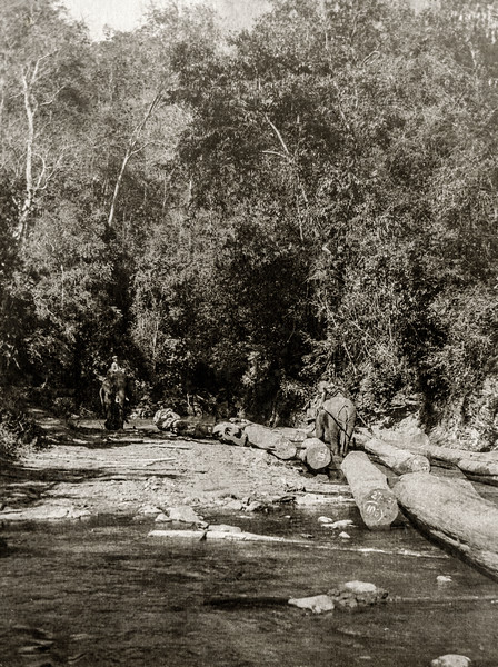""""""" The Ma Sa Ngoon down which the elephants had to drag logs before the chute was built."""""""