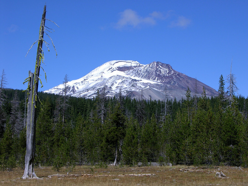 South Sister from Sparks Lake meadow