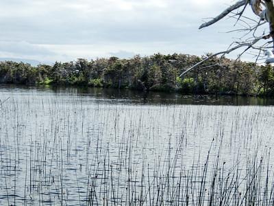 Reedy Pond