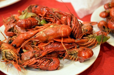 Anguilla Crayfish