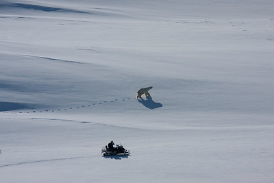 A skidoo comes close to a polar bear in east Greenland