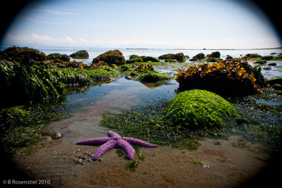 Tide pool, Campbell River, Vancouver Island, 2010