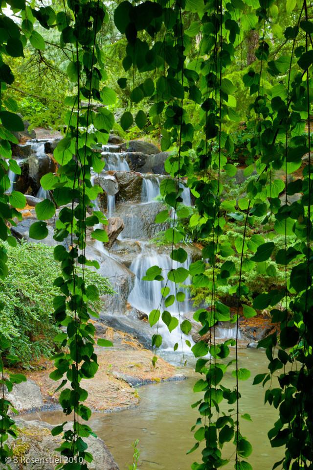 Through the Curtain<br /> Van Dusen Botanical Garden, Vancouver, Canada, 2010