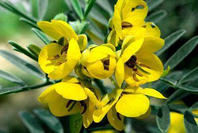 Yellow1266