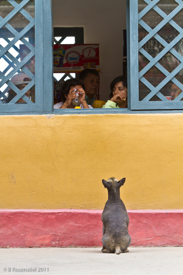 Waiting for a Snack<br /> Huaca De La Luna, Trujillo, Peru, 2011