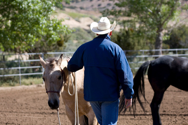 Norman. In the corner. Doin' his thing.  I will find out more about him, then just his cute little buckskin face, tomorrow.