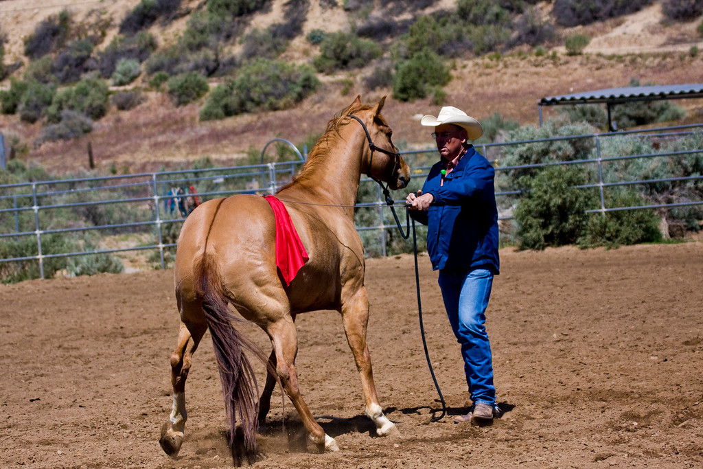 Learning to seperate the flag out...is pretty scary, at first. using a flag on such a sensitive horse, is something only an expert should do..nuff said.