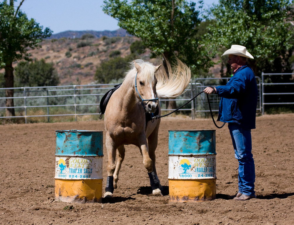 Little Yellow and his Big Dilemma. Barrels make it so he can't shoulder in. There is a way out..always an option to go forwards...lol...here, Greg is allowing Yellow to get straight. His tail is doin the talkin'.
