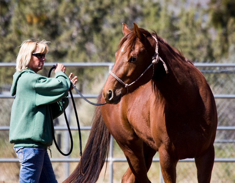 Cathy and her little barrel horse..the little horse has such a  quickness..snappy, crisp. She did well today.