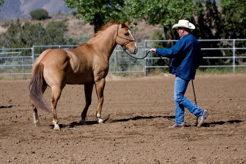 I thought when I saw this shot...oh, my gosh, his legs...but you know, that is just what happens when a horse is so tight..it comes from the hoof up to the brain and back again.  Kip is a great pony. He wants to believe in himself again.  By end of Day 1, Deb, his owner, and Greg will have made great strides.  This shot was taken at 1/1200th of a second.  Too fast for the human eye to detect...this buckle of the legs...tension..here,.the tension is broken down into fractions of a second..and then you can see, just what kind of stress that chaos in Kips mind generates..look how out of shape his whole body is..almost alien like as the stress works it's way around his body  God love ya, Kip. You are trying, and giving it all you can.