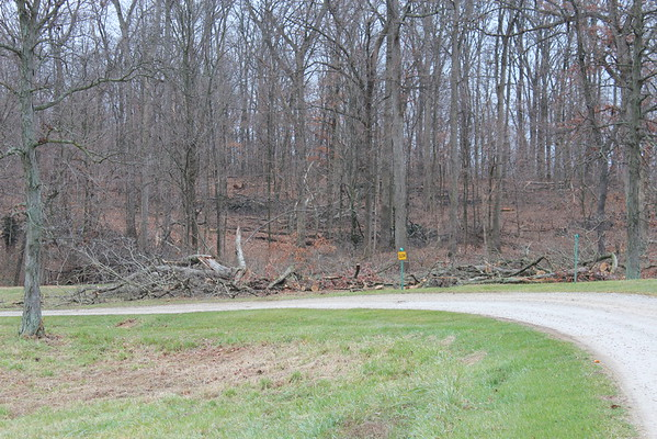 Grounds, Treetops 12-2014