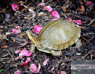 turtle-0221