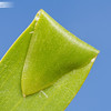 Leaf Folding 4