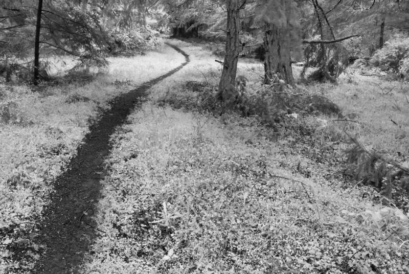 Path Through Forest, San Juan Island