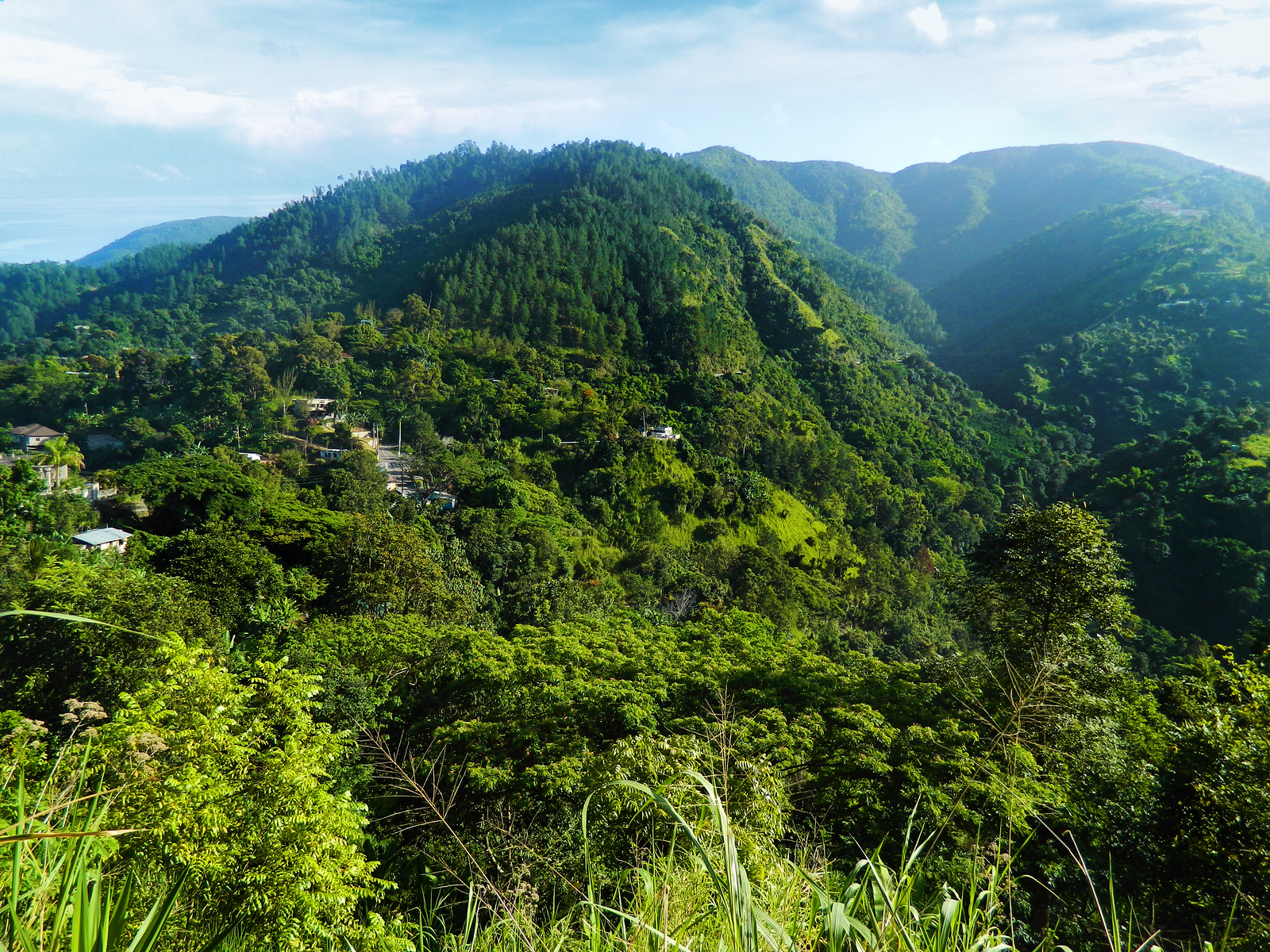 The Blue Mountains: Jamaica's first World Heritage Site