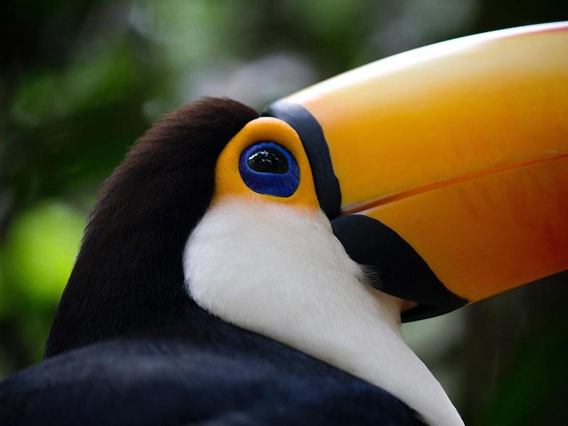 Aves tropicales en el Parque Nacional Iguazú