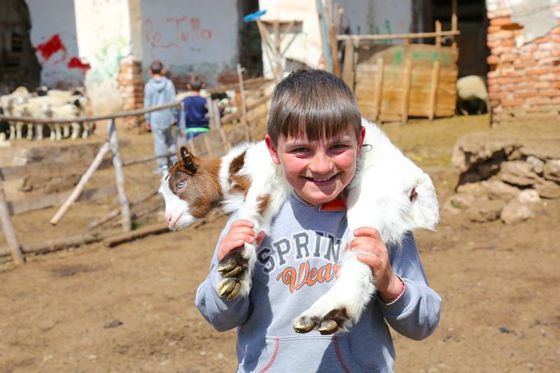 Albanian child with a goat