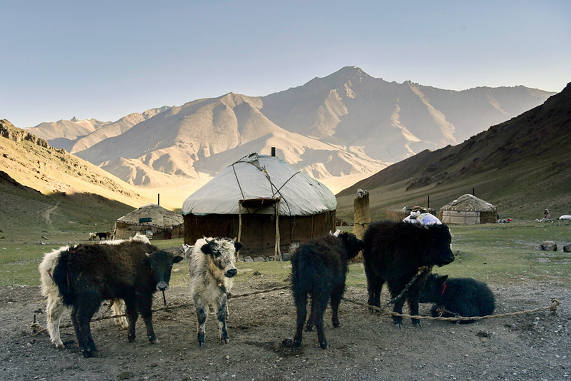 Yurt and cattle in the Pamir Mountains