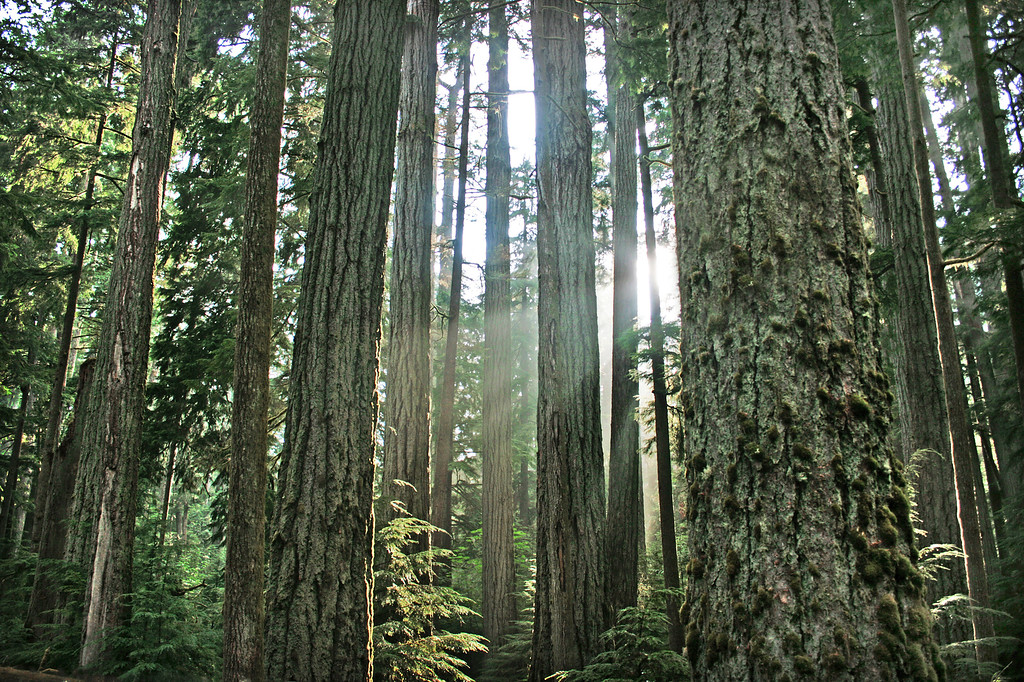 Things to do in Vancouver's Urban Parks
