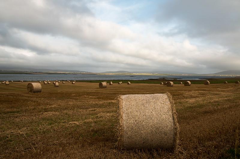 Modern Orkney Landscape