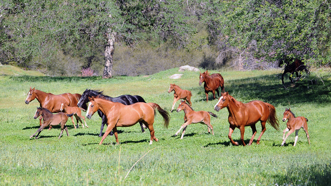"Fairlea Ranch- ""All the Pretty Little Ponies"""