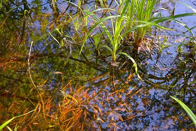 wetlands_03