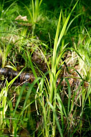 wetlands_15