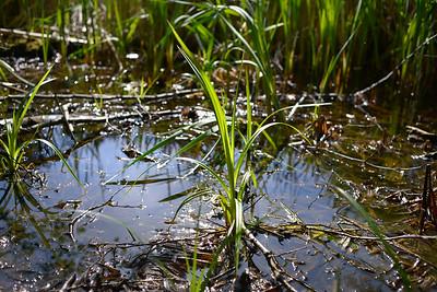 wetlands_06