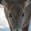The deer would come right up to the window of our cabin to feed on the free corn. Fun!