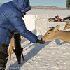 Deer were tame enough to eat out of your hand