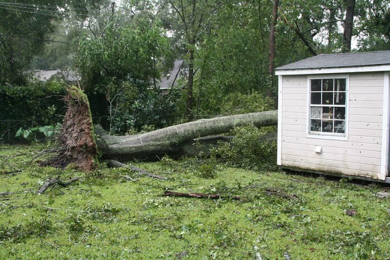 Brad's backyard.