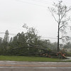 Downed trees near our subdivision.