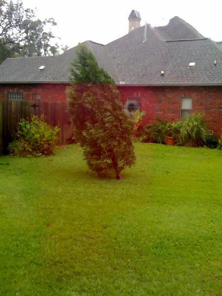 This tree was straight.  Thankz Gustav.