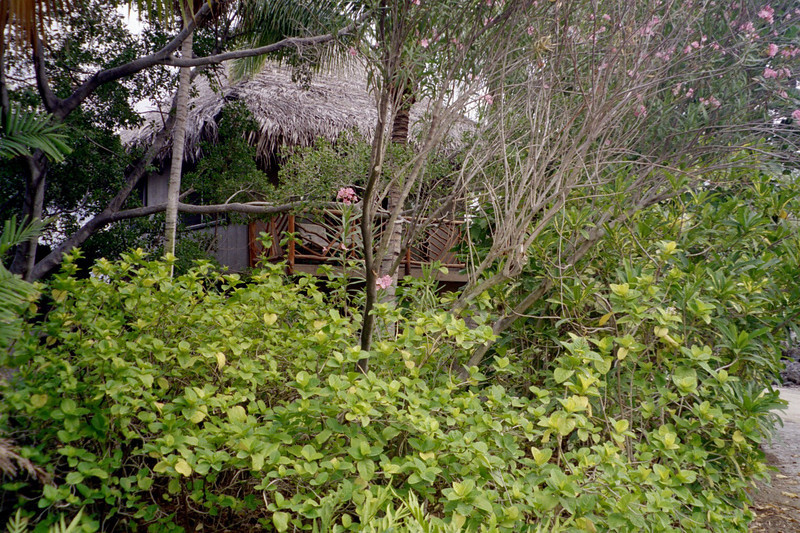 It was nice up there.  That's the lanai I used to record the morning wakeup of the birds.