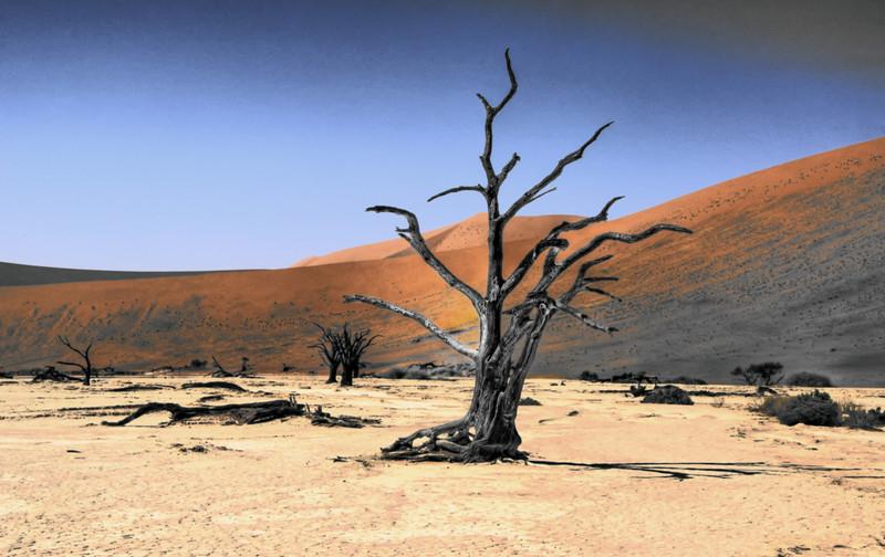 Dead Vlei, Namibia HDR.