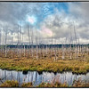 Marsh, New Brunswick, Canada - HDR.