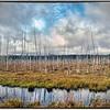 Marsh, New Brunswick, Canada - HDR.