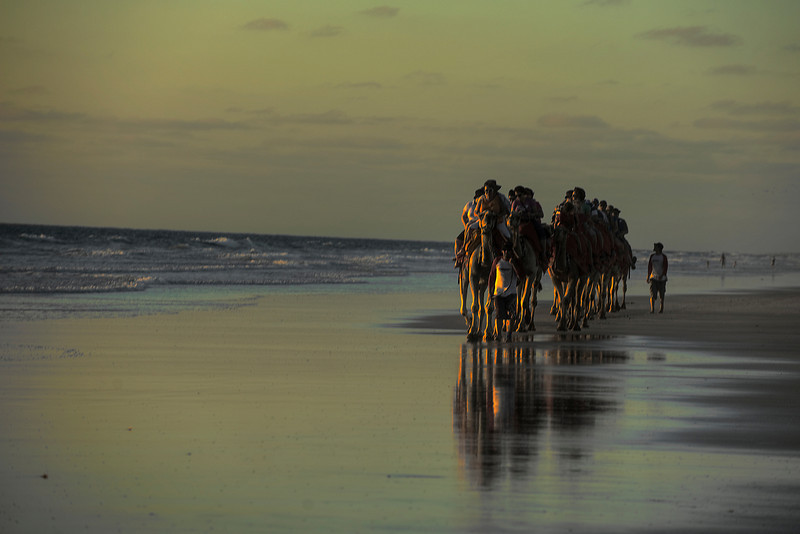 HDR: Camels on the beach, Broome, Australia.