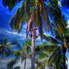 Climbing for Coconuts, Cook Islands, South Pacific Ocean HDR.