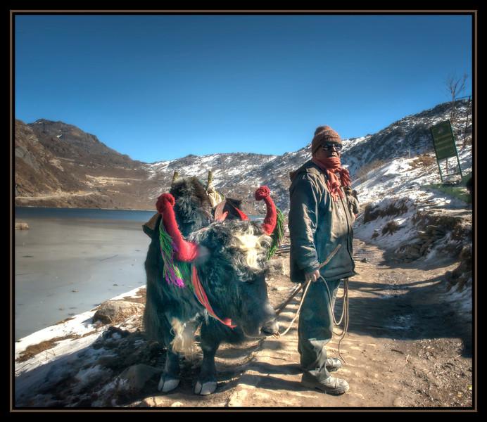 A Man and His Yak, Changu (Tsomgo) Lake, Sikkim, India.