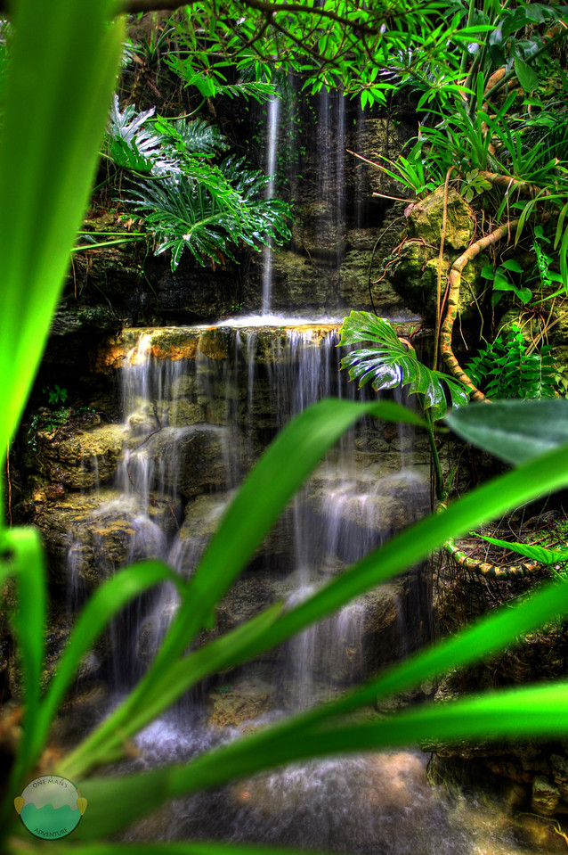 Krohn Waterfall Dos<br /> Another HDR look through some palms at the waterfall inside Krohn Conservatory.