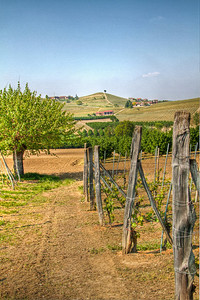 a lovely spring day in Barolo, about 2 weeks after bud break
