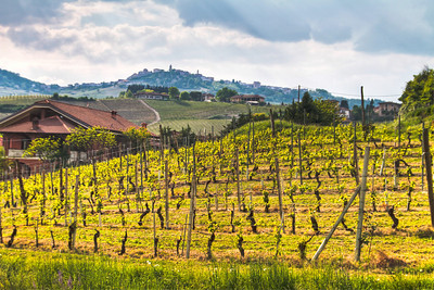 in Annunziatta, shortly after bud break. The ancient village of La Morra can be seen on top of the hill in the distance