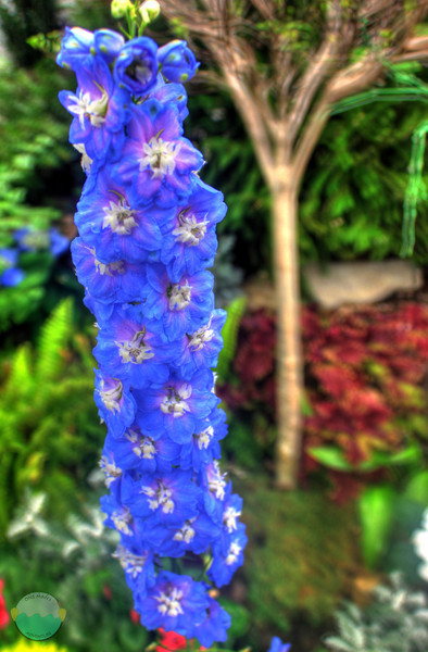 Purple Haze<br /> HDR image of a flower stalk at the Early Spring Flower Show at Krohn Conservatory.
