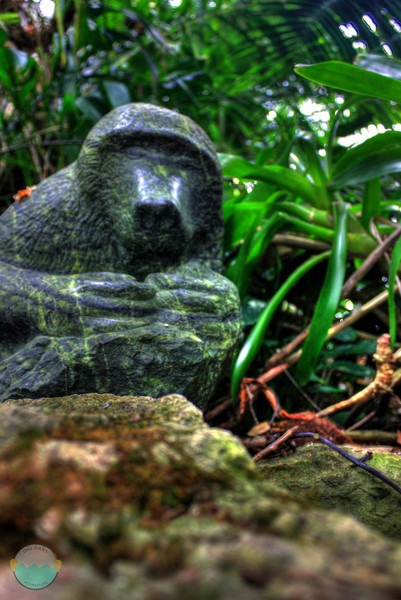 Monkey<br /> A monkey in HDR that stares at you and watches over the waterfall inside Krohn Conservatory.