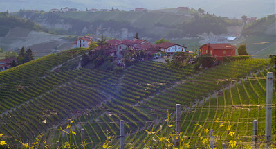 Barolo vineyards just outside of Annunziata. Best viewed on size X2, and hit your f11 key, I think. The ever-present marine layer is in the background.